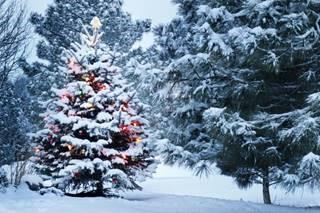 Gesloten tijdens de feestdagen!